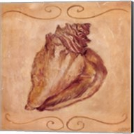 Conch Fine-Art Print