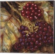 Ripening Berries Fine-Art Print
