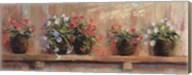 Petunias in Pots Fine-Art Print