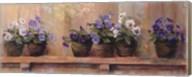Violets in Pots Fine-Art Print