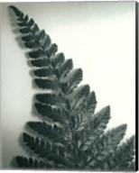 Fern Leaf I Fine-Art Print