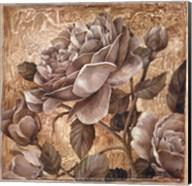 Antique Rose II Fine-Art Print