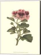 Pink Geranium II Fine-Art Print