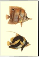 Antique Tropical Fish II Fine-Art Print