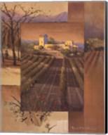 Sunrise Vineyard Fine-Art Print