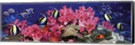 Tropical Fish Panorama Fine-Art Print