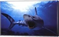 Shark Teeth Wall Poster