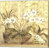 Espirit Orchid Fine-Art Print