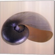 Polished Nautilus Fine-Art Print