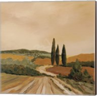Shady Tuscan Fields Fine-Art Print