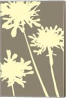 Pompom Brule Fine-Art Print