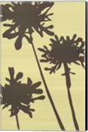 Pompom Brule (reverse) Fine-Art Print