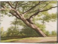 Leaning Tree, 2003 Fine-Art Print