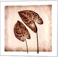 Tropical Caladiums Fine-Art Print