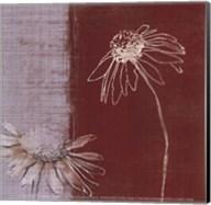 Daisy Sketch II Fine-Art Print