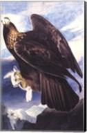 Golden Eagle Fine-Art Print