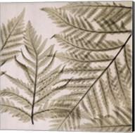 Ferns I Fine-Art Print