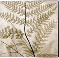 Ferns II Fine-Art Print