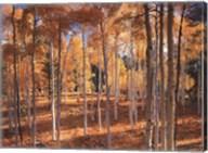 Autumn Aspens Fine-Art Print
