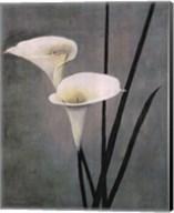 Call Lily on Grey Fine-Art Print