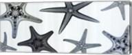 Starfish Collection (Teal) Fine-Art Print