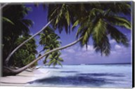 Palm Trees Leaning Fine-Art Print