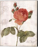 June Rose Fine-Art Print