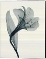 Alstromeria I Fine-Art Print