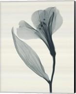 Alstromeria II Fine-Art Print