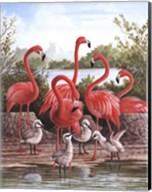 Flamingo 1 Fine-Art Print