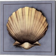Coastal Shell II Fine-Art Print