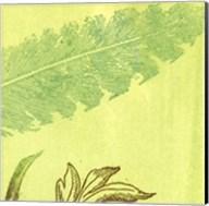 Feather Leaf Fine-Art Print