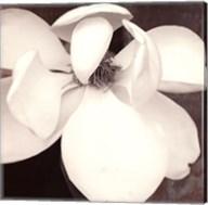 Magnolia Blue II Fine-Art Print