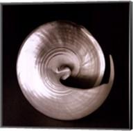 Nautilus II Fine-Art Print