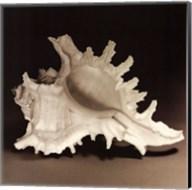 Spiny Shell I Fine-Art Print