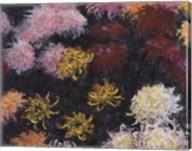 Chrysanthemum, 1897 - close up Fine-Art Print