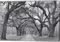 Oak Arches Fine-Art Print