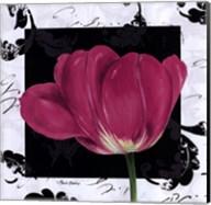 Damask Tulip II Fine-Art Print