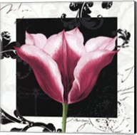 Damask Tulip III Fine-Art Print