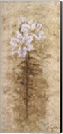 Lily Fair Fine-Art Print