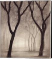 Forest IV Fine-Art Print