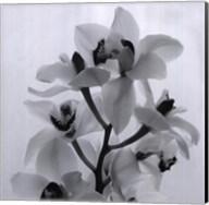 Orchid Spray I Fine-Art Print