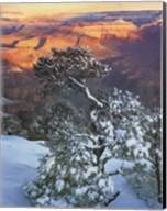 Grand Canyon Sunrise Fine-Art Print