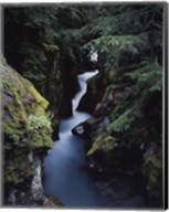 Avalanche Creek Fine-Art Print