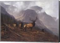 Bookcliffs Elk Fine-Art Print