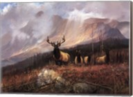 Bookcliffs Elk I I Fine-Art Print