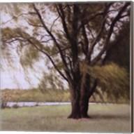 Lakeside Trees II Fine-Art Print