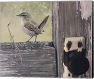 House Wren Fine-Art Print