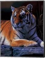 Bengal Tiger Fine-Art Print