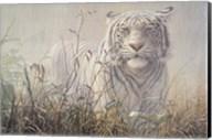 Monsoon- White Tiger (detail) Fine-Art Print